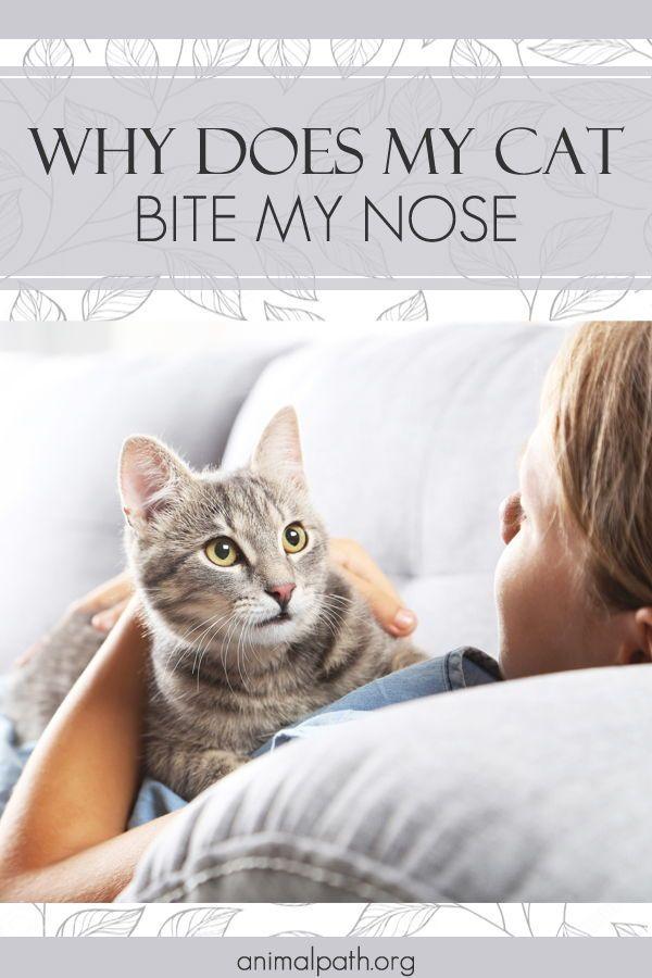 Pin On Cat Behavior
