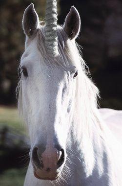Google Image Result for http://www.rosylife.co.uk/assets/Uploads/Unicorn-Photo.websize.jpeg