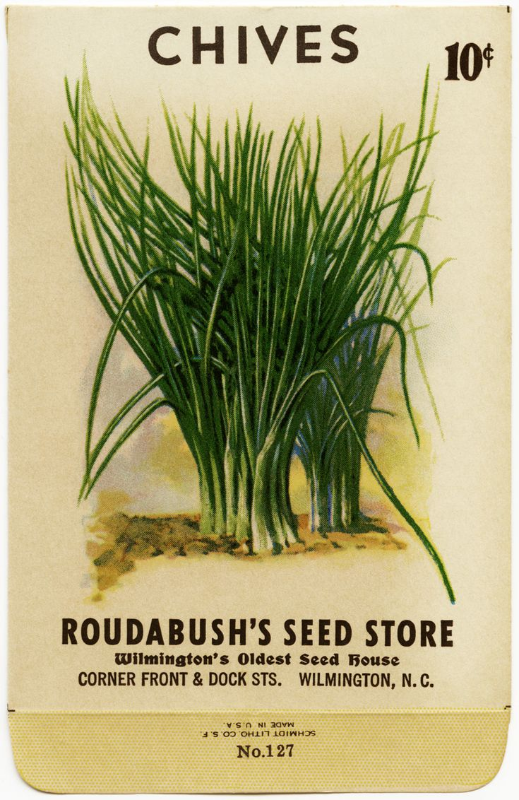 Old Design Shop ~ free digital image: vintage chives seed packet