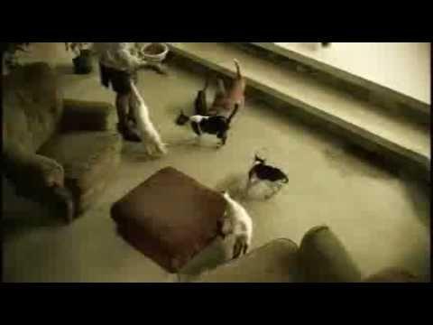 Pupil - Teacher's Pet (Official Music Video)