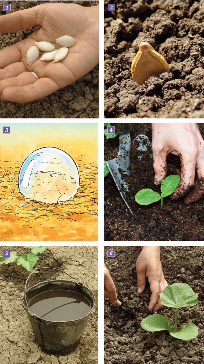 Zucche – Varietà e coltivazione