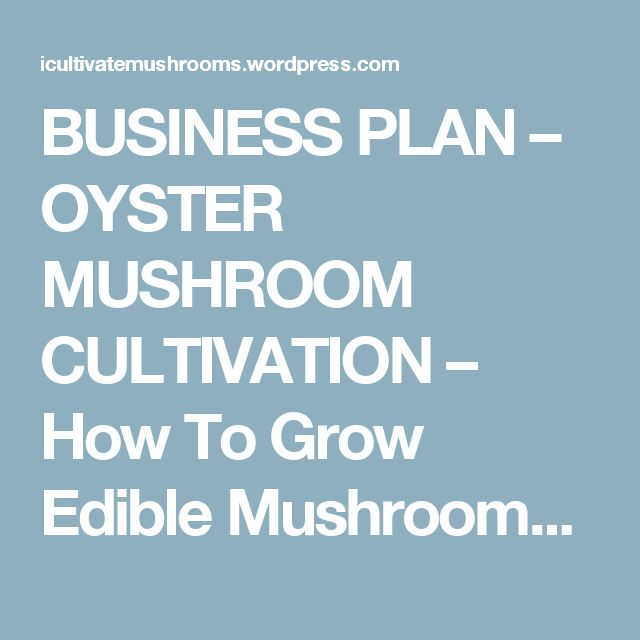 BUSINESS PLAN – OYSTER MUSHROOM CULTIVATION – How To Grow Edible Mushrooms And Grow Rich