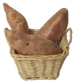 Everything you need to know about Growing Organic Sweet Potatoes