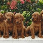 Pet Shipping Service-How To Ship A Pet