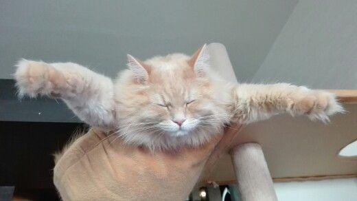 タワーのハンモックでこんな感じで寝るのよね劉備