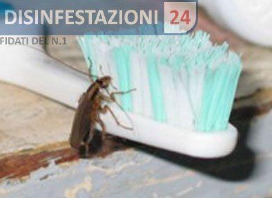 #disinfestazione #scarafaggi #blatte #blatta #blatella #germanica