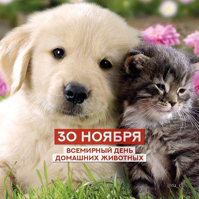 того что открытки день домашних животных 30 ноября сезон