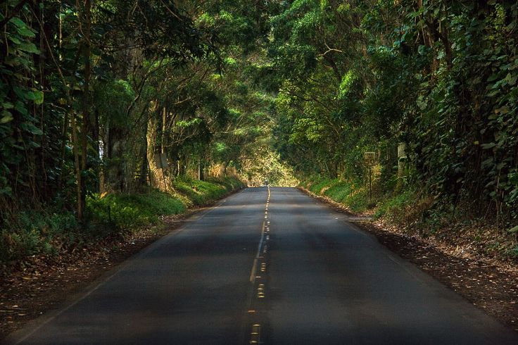 Kauai tree tunnel! This is so beautiful! My boys loved driving through it.