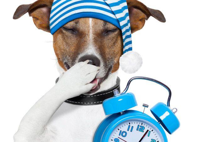 A privação do sono pode acabar com você e sua carreira - Artigos - Carreira - Administradores.com