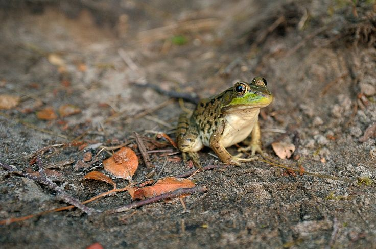 The Frog Princess by Pavel Voronenko on 500px