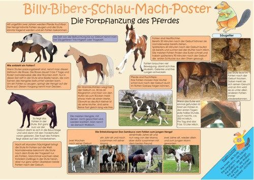 Pferdeposter  Billy-Bibers-Schlau_Mach-Poster   Die Fortpflanzung des Pferdes