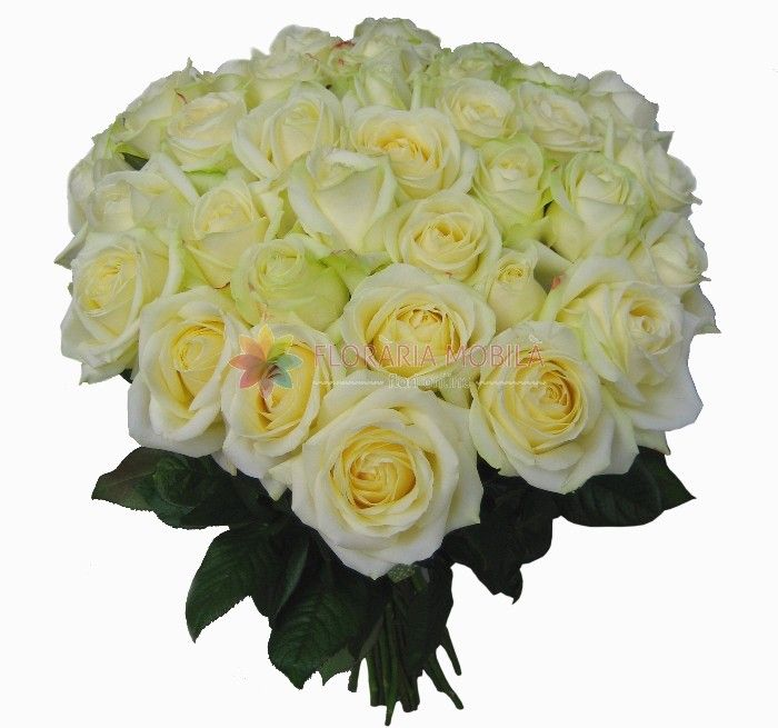 buchet 41 trandafiri albi 41 white roses bouquet - Luxury Collection