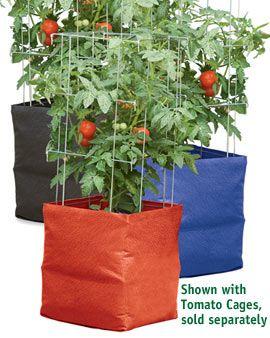 Tomato, potato & pepper grow bags!
