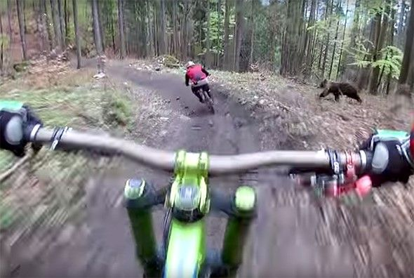 This video of a bear chasing a biker is why POV cameras were invented: Digital Photography Review