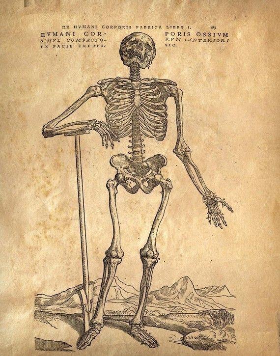 40 best vintage medical illustrations images on pinterest vintage anatomy print laughing skeleton vintage reproduction print human body bones educational biology chart diagram poster cp113 ccuart Gallery