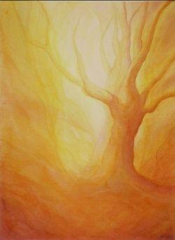 Firey tree veiling classe 7