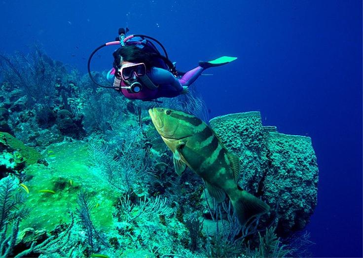 France Plongee - Plongee Koh samui - Plongee Koh Tao - Formation Padi, open Water en français
