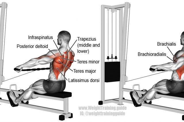 Wide-grip cable row exercise illustration