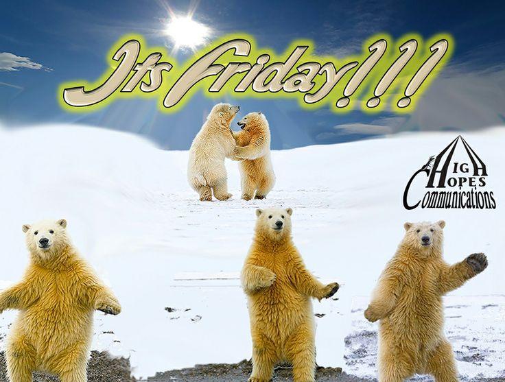 It's Friday Bears 1 www.highopescommunications.ca