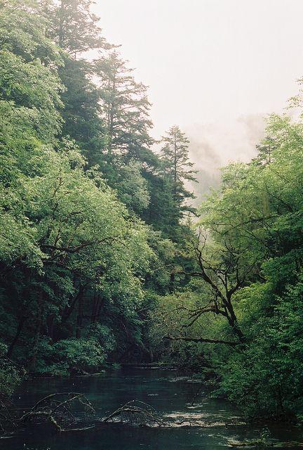forest, green, landscape, love