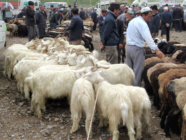 Goats are tethered together at the Sunday livestock market in a suburb northwest of Kashgar, Xinjiang, China.