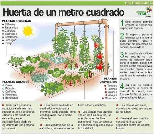 el5antuario.org: Huerta urbana en un metro cuadrado