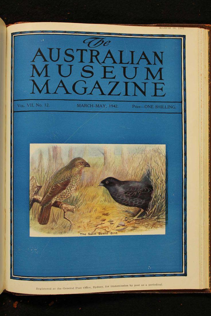 Australian-Museum-Magazine. The Satin Bower Bird. Illustrator: Lilian Medland. http://australianmuseum.net.au/Australian-Museum-Magazine-1921-1942/