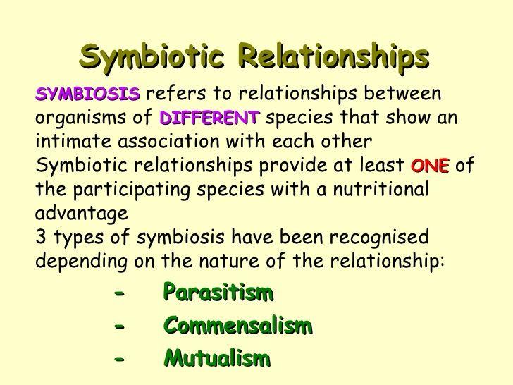 mika leivo symbiotic relationship