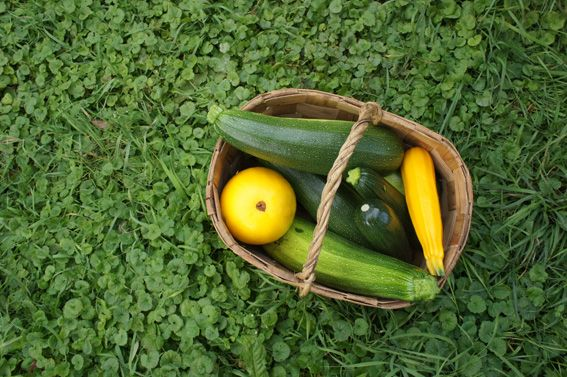 Zucchinis. Kemiönsaari 2013