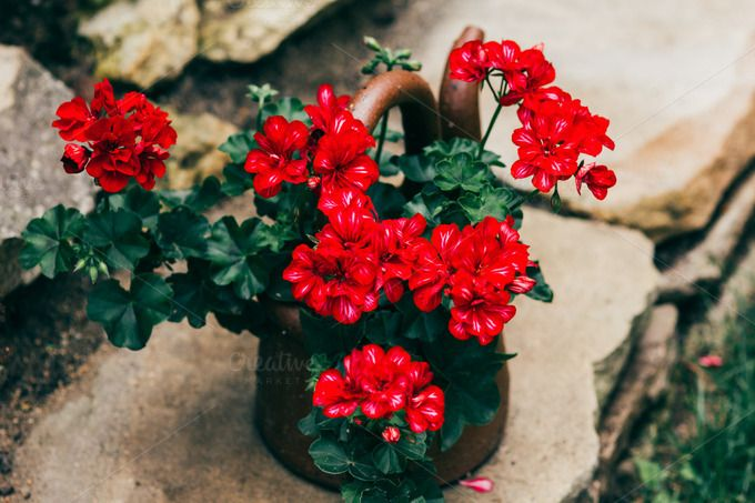 Red Flower by Hombre-cz on Creative Market
