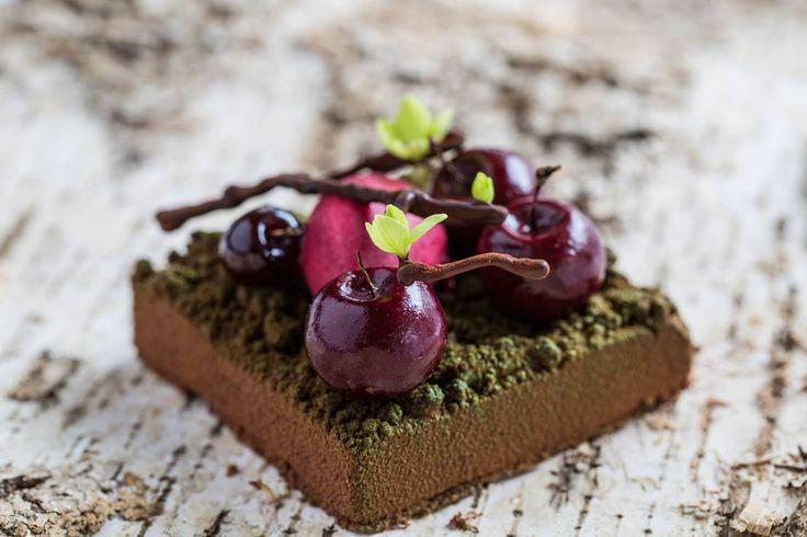 Black Forest with kirsch mousse, Amarena and Morello cherry sorbet   Pétrus, London