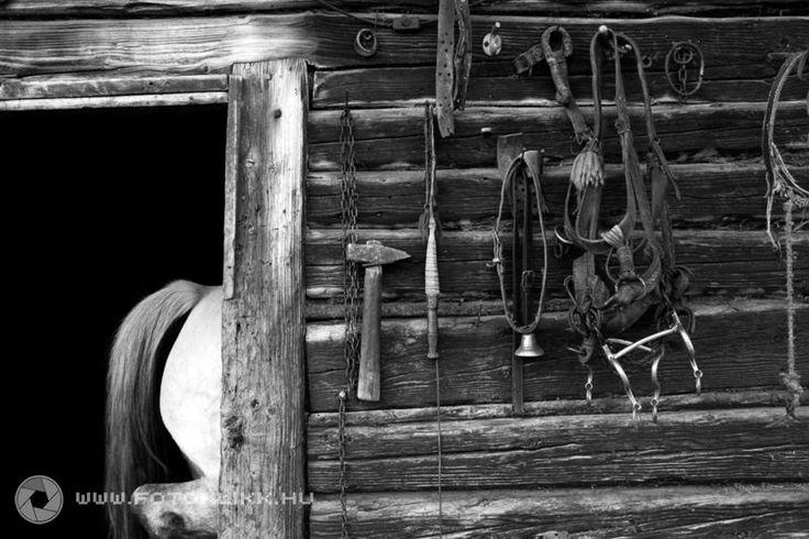 Háromkúti hangulat Háromkút a szorvány csángó település elszigetelten éli mindennapjait.