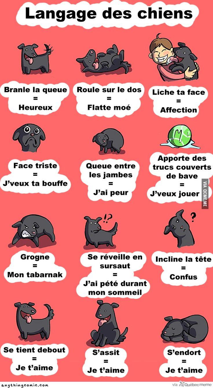 Le langage des chiens – Québec Meme +