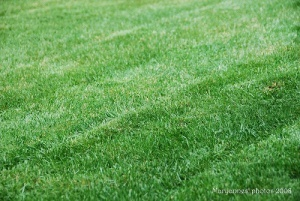 The smell I fresh cut grass, usually marking the beginning of summer in the air