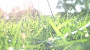 Image result for park grass depth of field