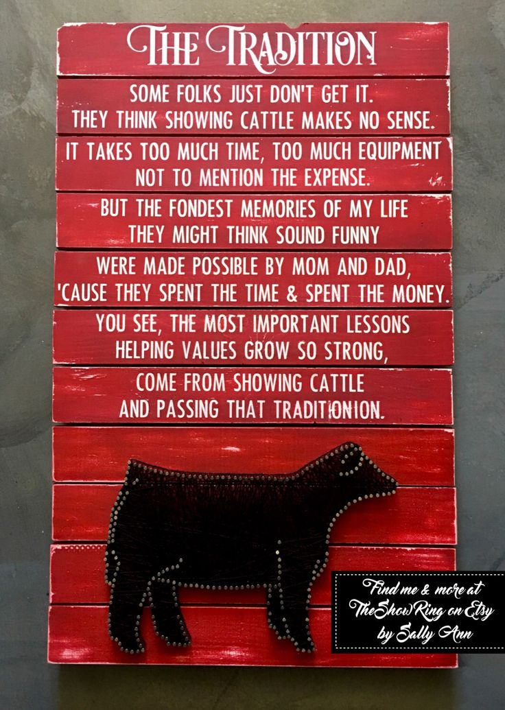 The Tradition Cattle - Show Steer - Heifer - Cow - Bull by TheShowRing on Etsy https://www.etsy.com/listing/277766052/the-tradition-cattle-show-steer-heifer