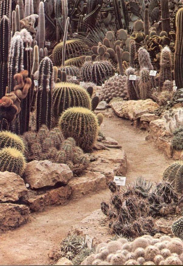 d-d-d: disguise: beautiful-portals: cosmic-dust: sweethotdrift mystic-lady Cacti Path