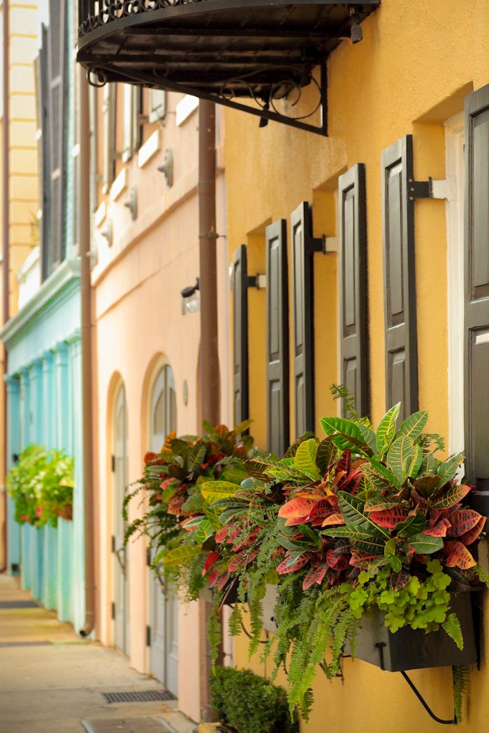 Autumn Window Boxes, Rainbow Row, Charleston, SC