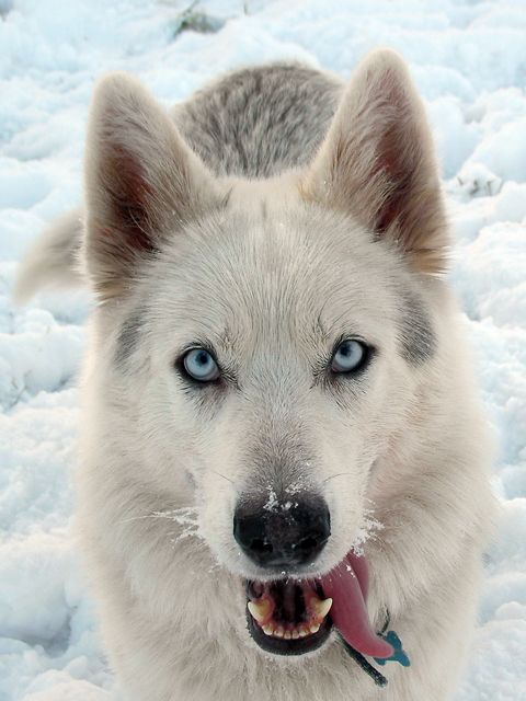 Beautiful Northern Inuit! Borrow for Free (Amazon KOLL):   Lowest Prices:   http://www.amazon.com/E-R-Llewelyn-Pritchard/e/B0061KYLG2/ref=ntt_dp_epwbk_0