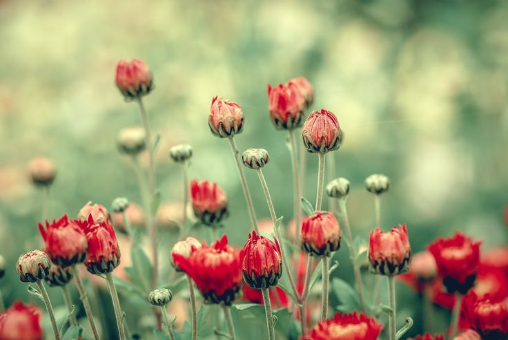 Photograph Amateur Botanical Observations [033] by S. S. on 500px