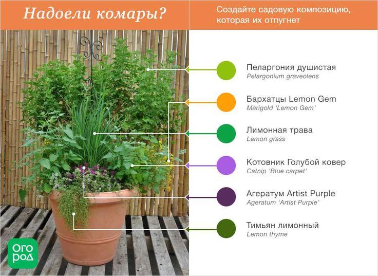 Растения от комаров
