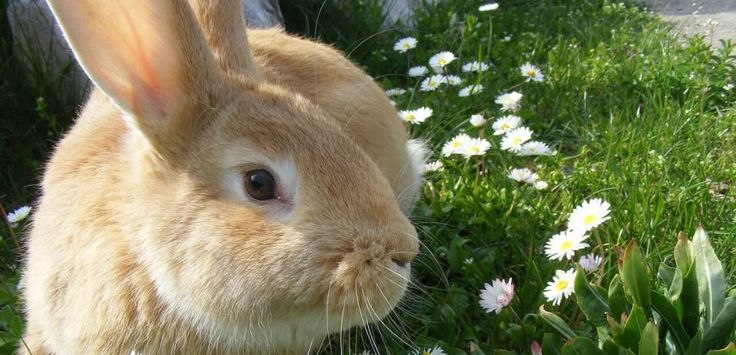 The Dutch government is working to phase out all animal experiments – and PETA is helping!