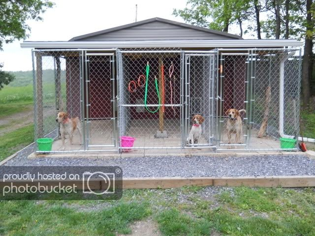 Ukc Forums Any Dog Kennel Ideas Dog Kennel Dog Kennel Roof