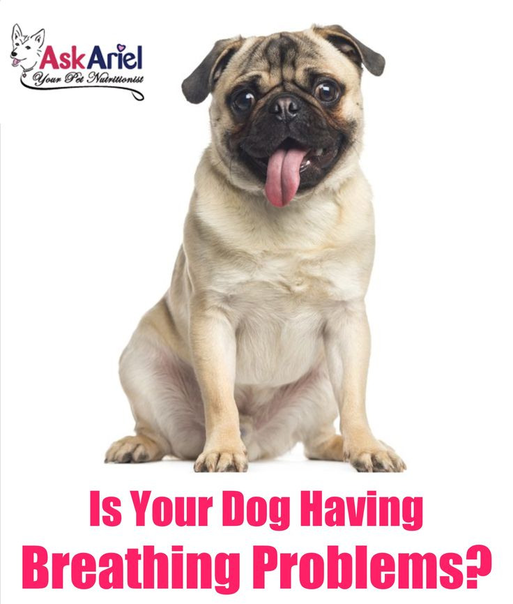 Dog Breathing Problems Are Scary Dogs May Wheeze Pant Cough