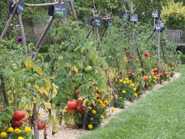 Les 72 Meilleures Images Propos De Jardin Potager Tomates Poivrons Aubergines Sur