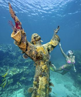 Best Key Largo Snorkeling Ideas On Pinterest Key Largo - The snorkeling guide to florida 10 spots for underwater exploring