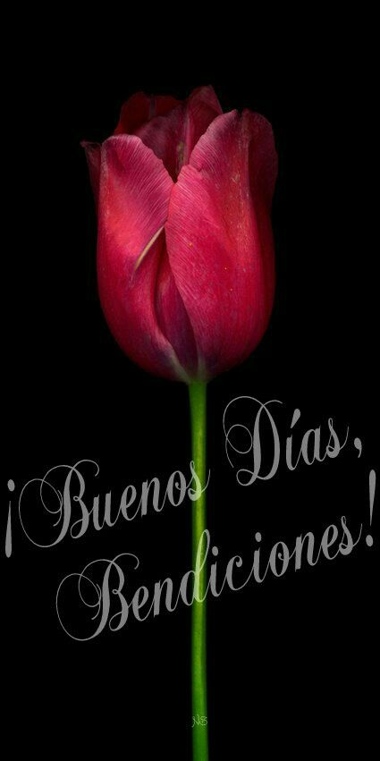 ¡Buenos Días, Bendiciones!