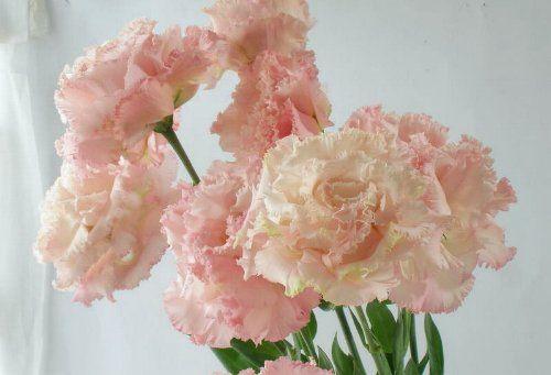 http://flower-p.com/wp/blog/wp-content/uploads/2013/06/90622-toruko-p.jpg