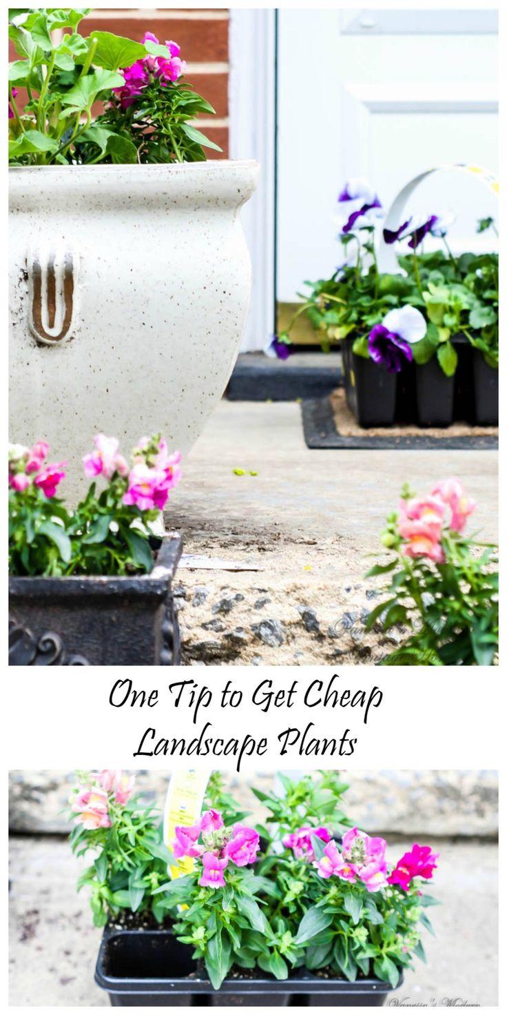 How to get cheap landscape plants. Buy cheap plants.