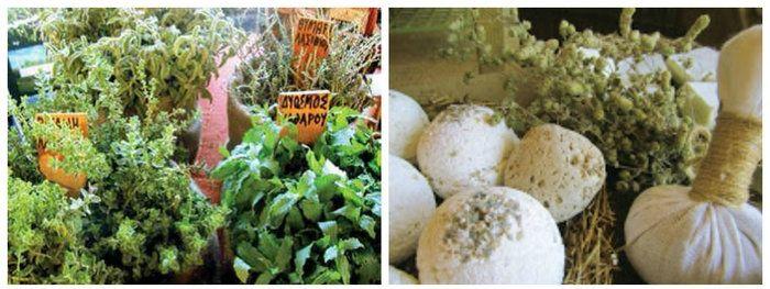 Cretan herbs workshops in Cressa Ghitonia Village,in Sfaka - Crete! Learn more: www.cressa.gr  #herbs #workshops #crete # greece